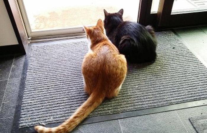 ロールアウトパラグライダースクールの看板ネコ、オニオンとネロ